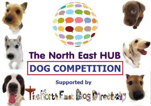 north east dog competition