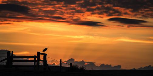 Ian-Glendinning-Northumberland-Curlew